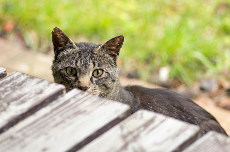 キジトラ猫ジャイアン